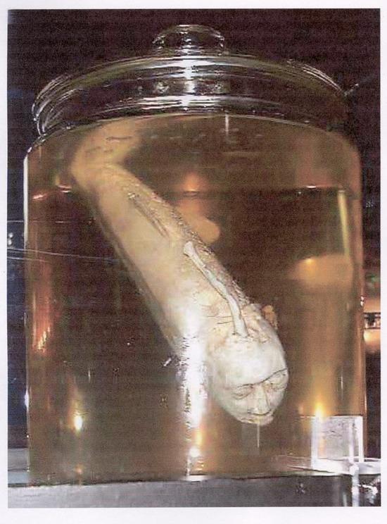 Ikan berkepala manussa
